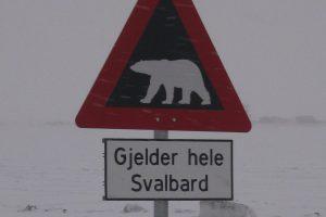 1_Eisbärenschild-crop